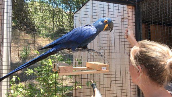 macaw nail trim with platform