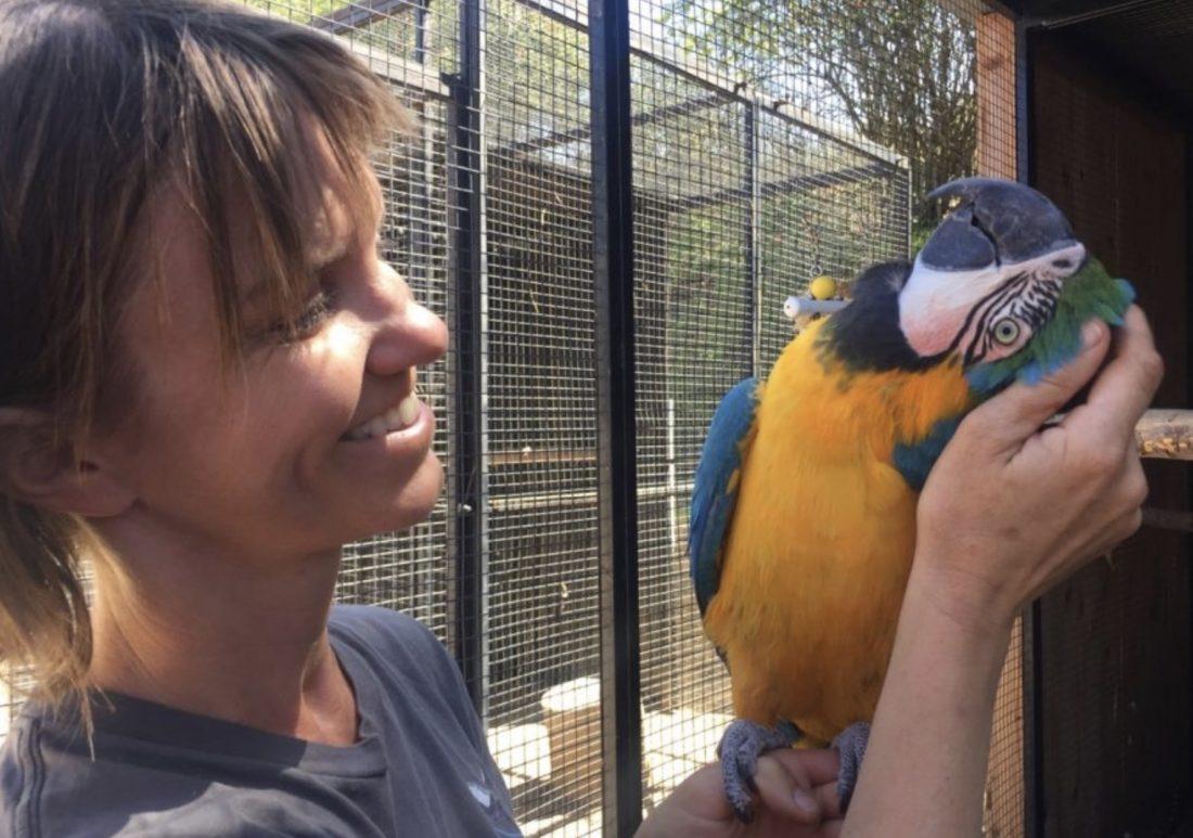 macaw head scratch