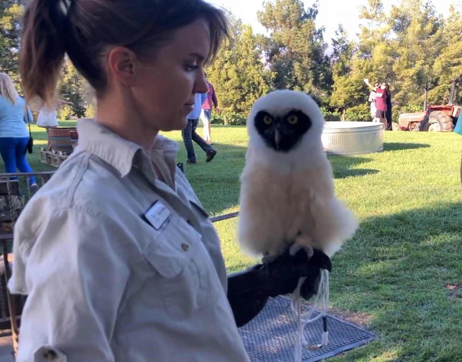 spectacled owl at an event