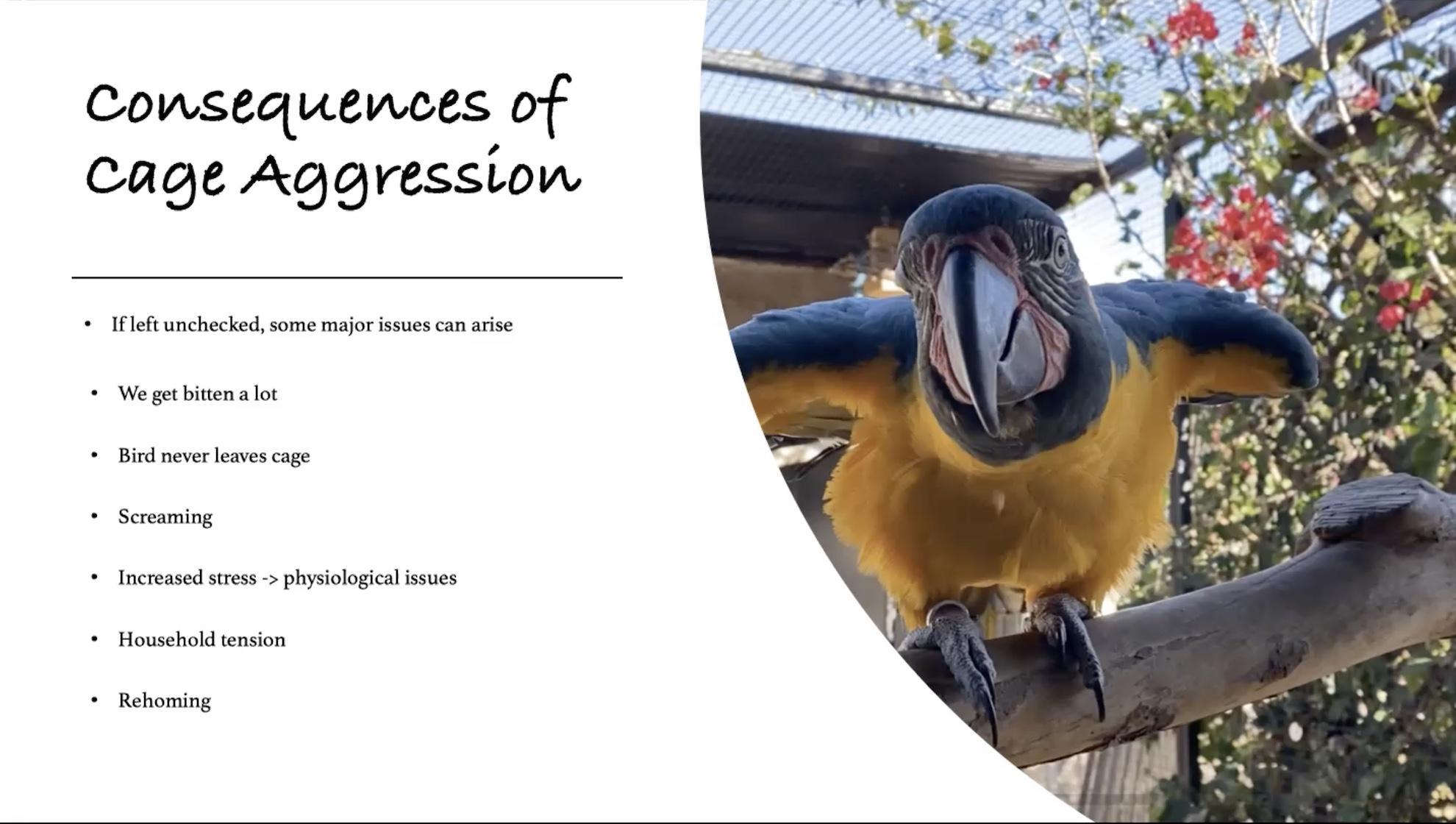 cage aggression webinar