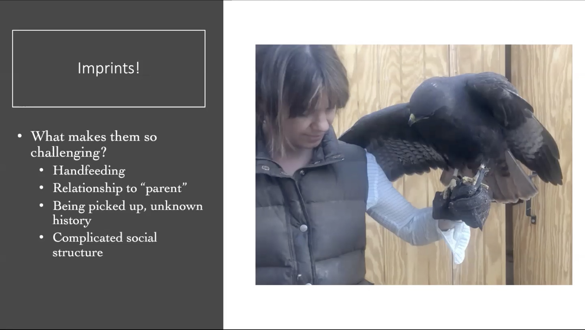 webinar avian behavior imprints
