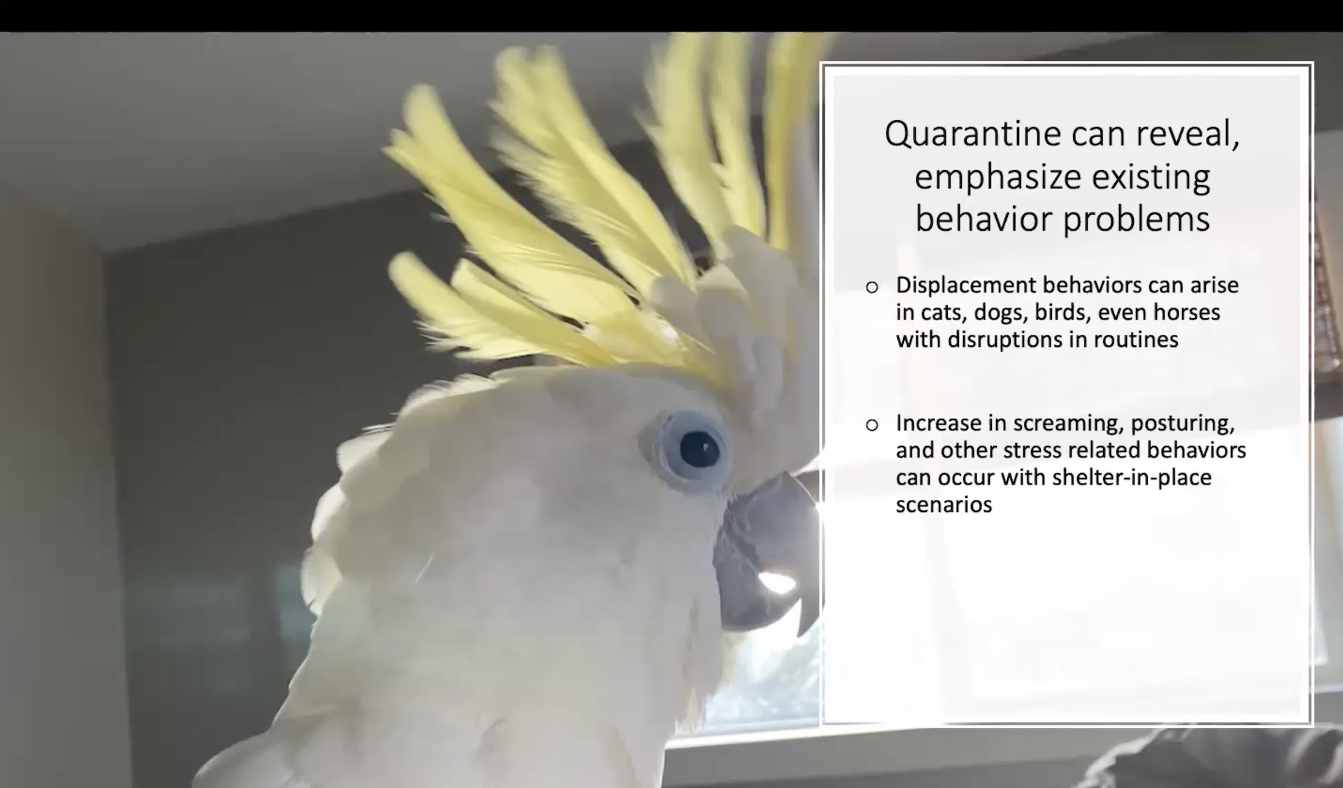 quarantine webinar