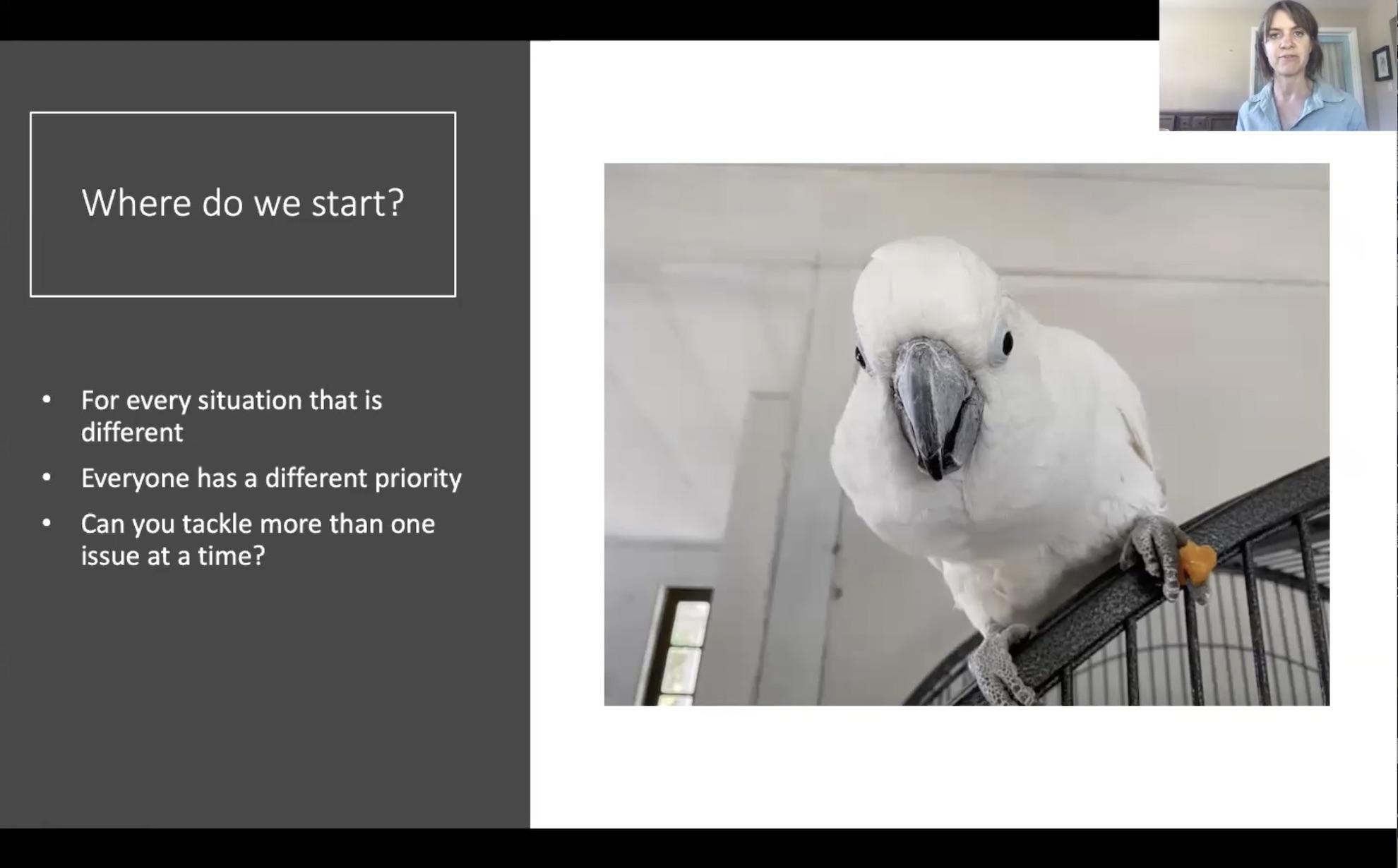 webinar rehomed parrots